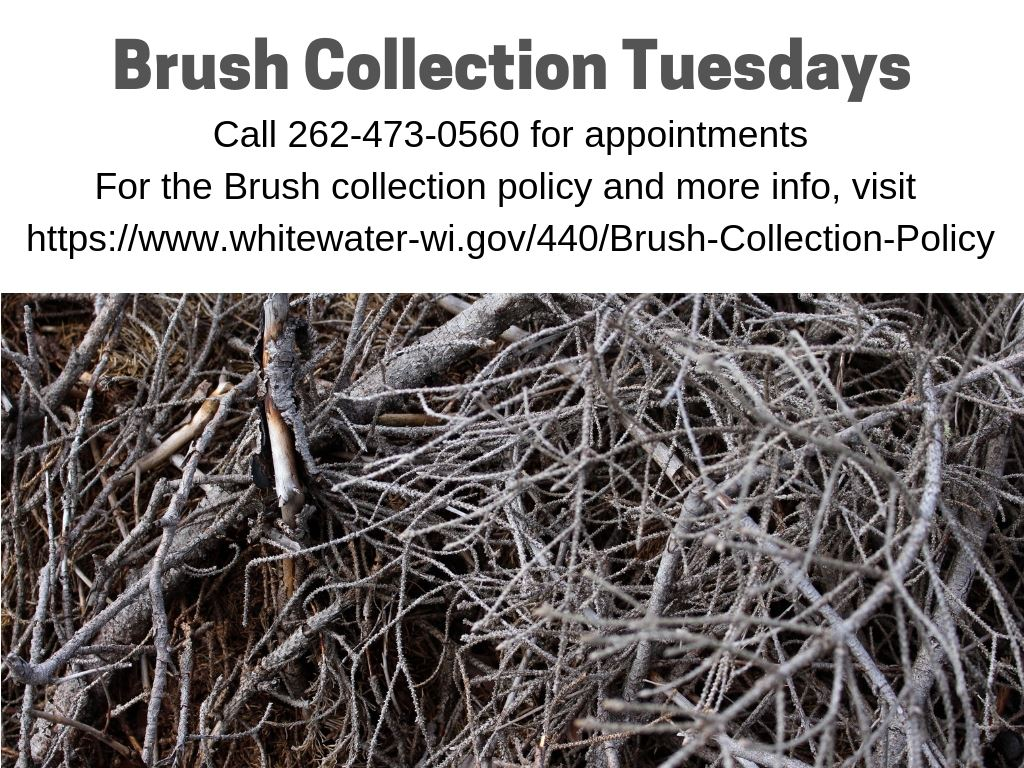 Brush Collection